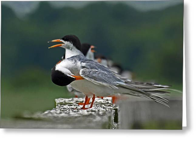 Tern Greeting Cards - The Bath Greeting Card by Terrie Stickle
