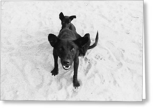 Puppies Photographs Greeting Cards - The Beach Greeting Card by Kiradee Ketakinta