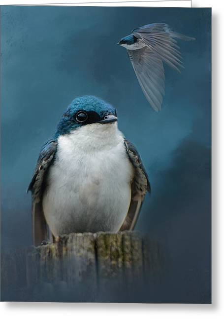 Swallow Photographs Greeting Cards - The Beautiful Tree Swallow Greeting Card by Jai Johnson