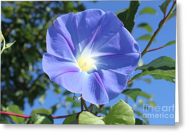 True Blue Greeting Cards - The Beauty of Blue  Greeting Card by Cathy  Beharriell