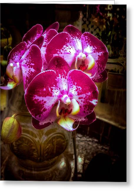 The Beauty Of Orchids Greeting Card by Julie Palencia