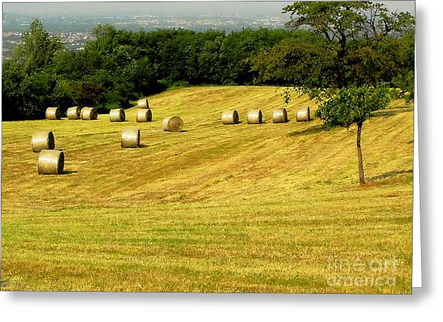 Hay Bales Greeting Cards - The Beauty Of Round Bales Greeting Card by Natalie Ortiz