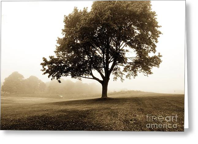 Night Scenes Greeting Cards - The Beauty of Trees Greeting Card by Marcia Lee Jones