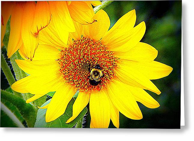 The Bee's Knees Greeting Card by Karen Cook