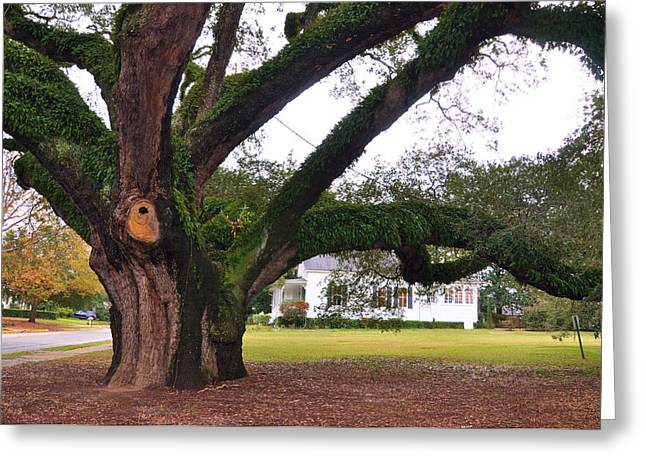 Thomasville Greeting Cards - The Big Oak Greeting Card by Jan Amiss Photography
