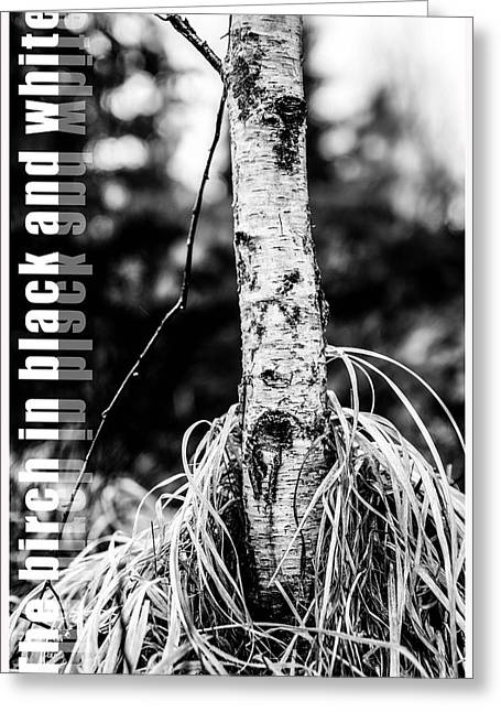 Lush Green Mixed Media Greeting Cards - The birch in black and white Greeting Card by Toppart Sweden