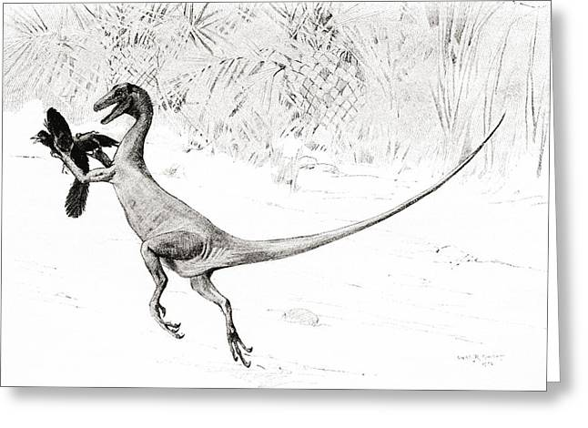 Hunting Bird Drawings Greeting Cards - The Bird Catching Ornitholestes Greeting Card by Ken Welsh