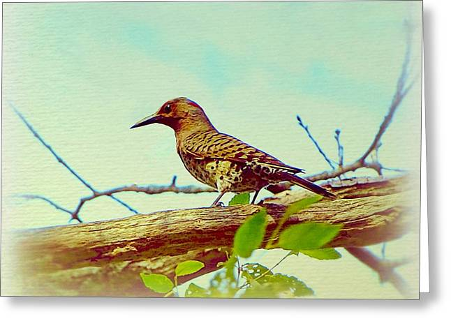 Bird On Tree Mixed Media Greeting Cards - The bird - chromatic editions Greeting Card by Lilia D