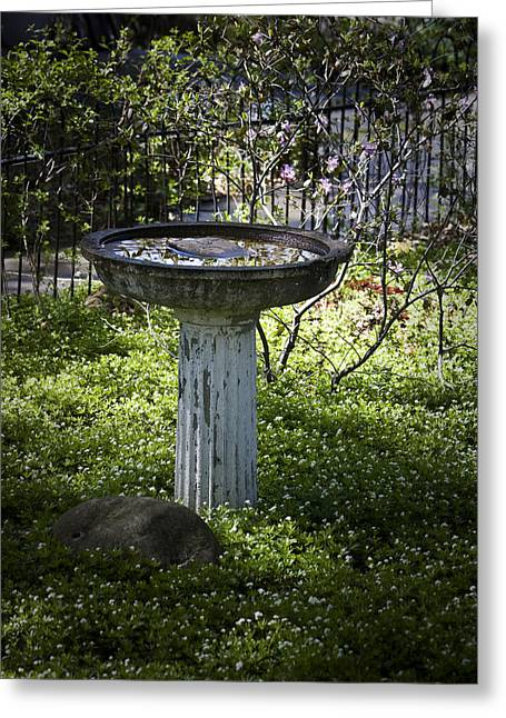 Birdbath Greeting Cards - The Birdbath Greeting Card by Teresa Mucha