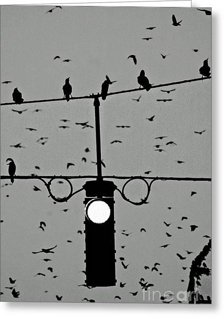 Anahi Decanio Greeting Cards - The Birds Greeting Card by Anahi DeCanio