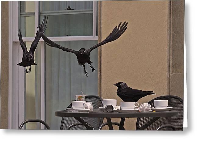 Blackbird Greeting Cards - The Birds Greeting Card by Rona Black