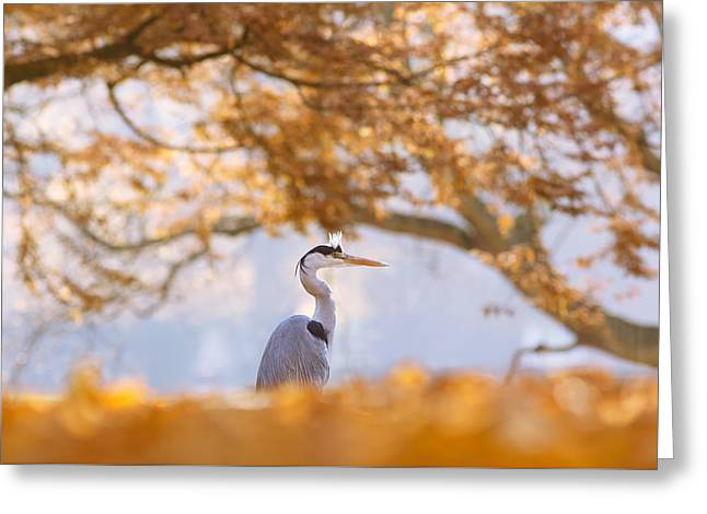 The Blue Heron And The Red Tree Greeting Card by Roeselien Raimond