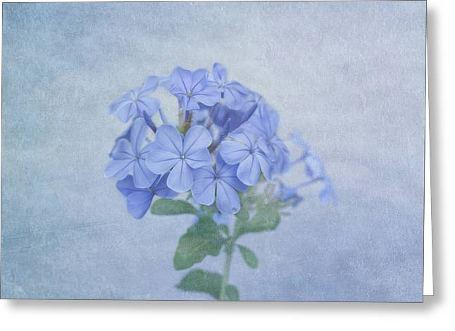 Subtle Colors Greeting Cards - The Blues Greeting Card by Kim Hojnacki