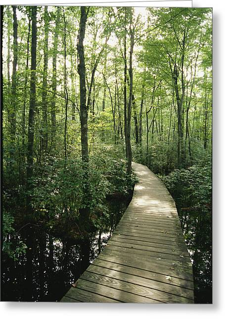 Middle Atlantic States Greeting Cards - The Boardwalk Nature Trail In Great Greeting Card by Skip Brown