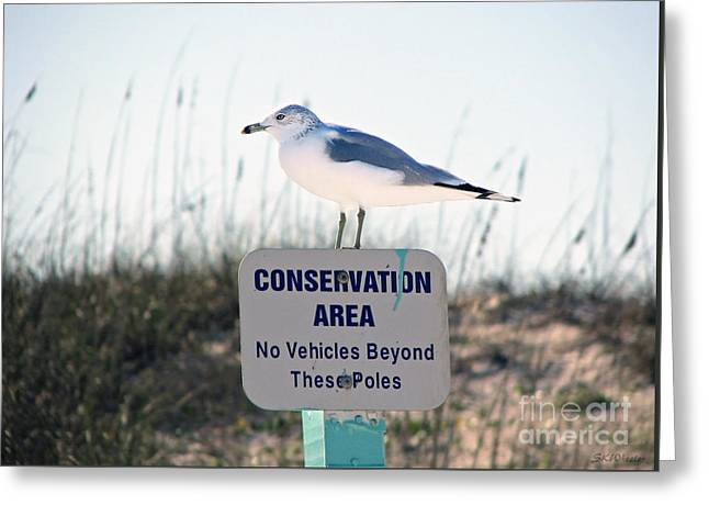 Tern Greeting Cards - The Boundary Line Greeting Card by Sabrina Wheeler