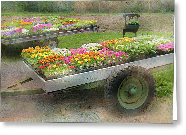 The Box Cart Greeting Card by Diana Angstadt