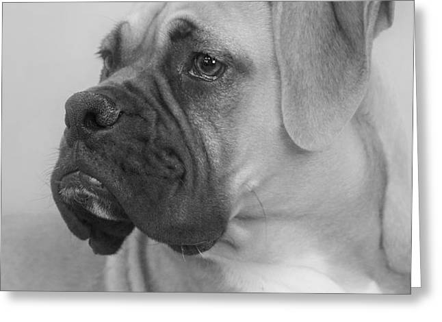 The Boxer Dog - the Gentleman amongst dogs Greeting Card by Christine Till