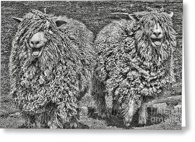 Maine Farms Greeting Cards - The Boys Greeting Card by Alana Ranney