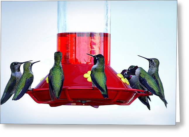 Birds Of A Feather Greeting Cards - The Breakfast Club Greeting Card by Lynn Andrews