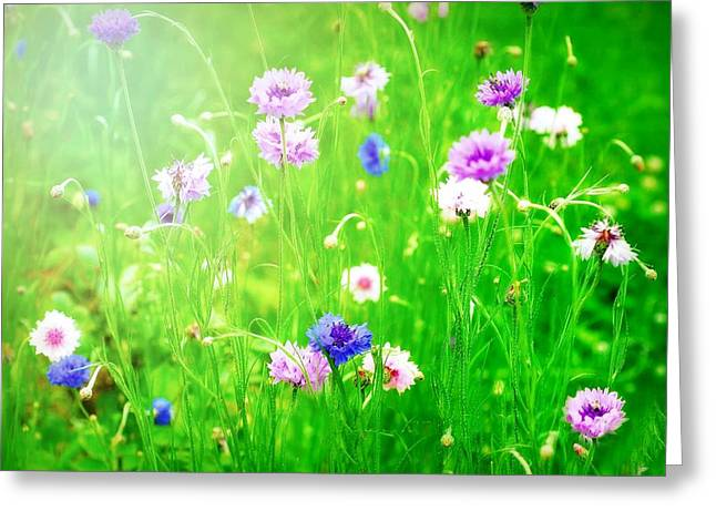 Pink And Purple Flowers Greeting Cards - The Budding Field Greeting Card by Diana Angstadt