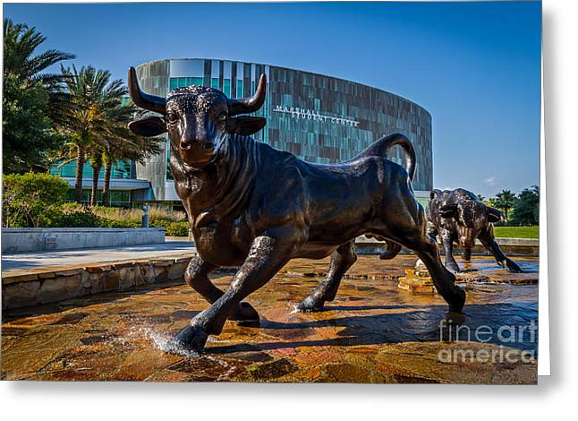 Usf Bulls Greeting Cards - The Bulls Greeting Card by Karl Greeson