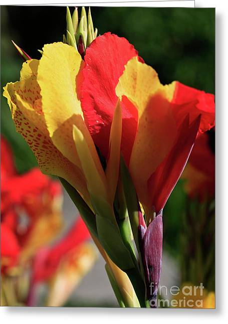 The Burning Flame Greeting Card by Tracy Hall