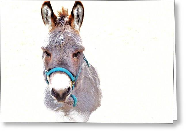 The Burro Greeting Card by Robin Hewitt
