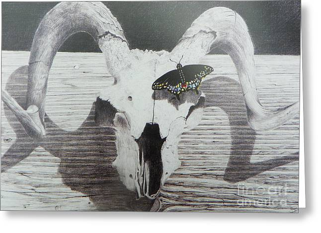 Still Life Photographs Drawings Greeting Cards - The butterfly and the skull Greeting Card by David Ackerson