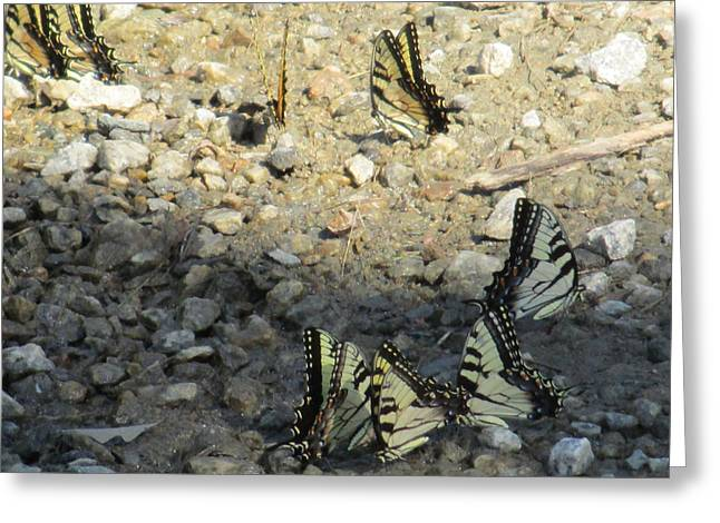 Charlotte Fine Art Greeting Cards - The Butterfly Dance Greeting Card by Charlotte Gray