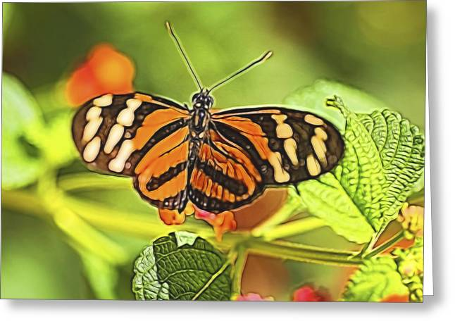 Color Enhanced Greeting Cards - The Butterfly Greeting Card by Gloria Anderson