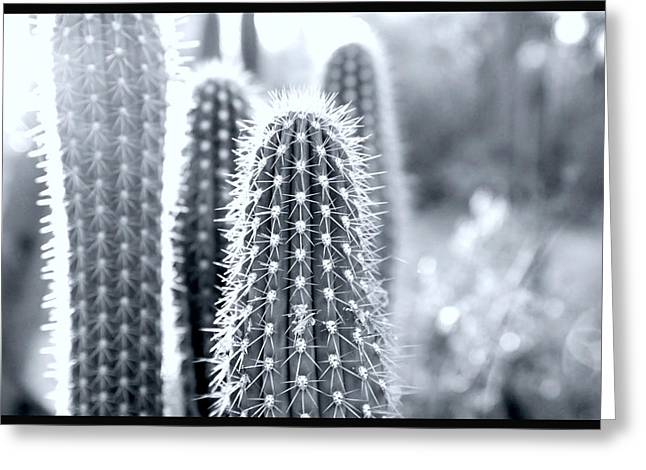 Desert Cactus Greeting Cards - The Cacti Family Greeting Card by Courtney Lively