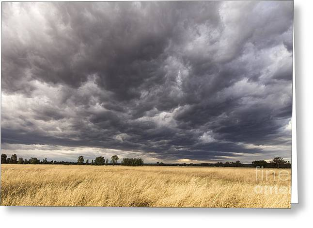 The Calm Before The Storm Greeting Card by Linda Lees