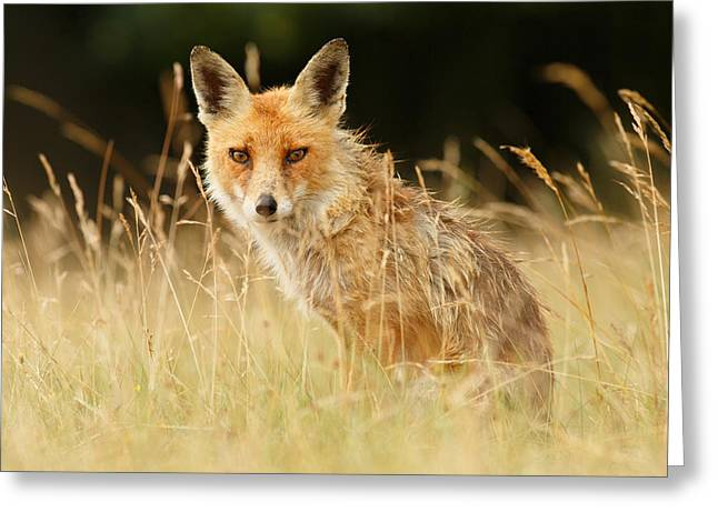 The Catcher In The Grass - Wild Red Fox Greeting Card by Roeselien Raimond