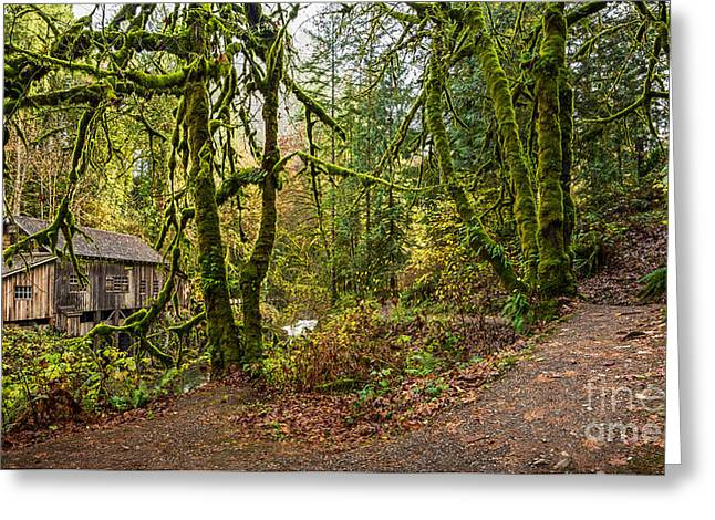 The Cedar Creek Grist Mill Trail Greeting Card by Jamie Pham