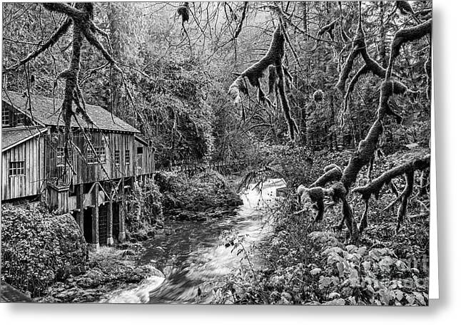 The Cedar Creek Mill Moss Greeting Card by Jamie Pham