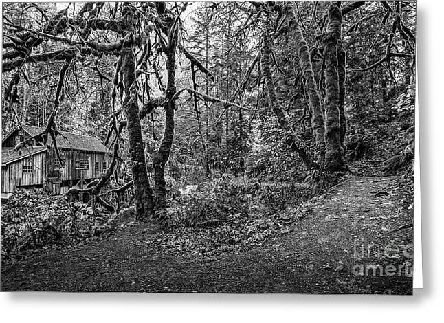 The Cedar Creek Mill Trail Greeting Card by Jamie Pham