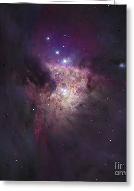 Emission Nebula Greeting Cards - The Center Of The Orion Nebula The Greeting Card by Robert Gendler