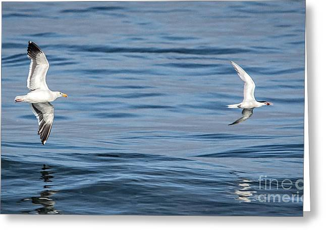 Ventura California Greeting Cards - The Chase Is On Greeting Card by Danny Goen