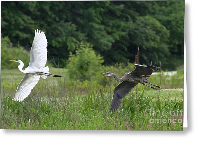 The Chase Greeting Card by Robin Erisman