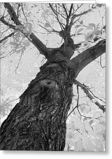 Fineartphotography Greeting Cards - The Climb  BW Greeting Card by James BO  Insogna