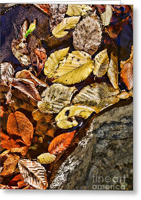 The Color Of Fall Greeting Card by Paul Ward