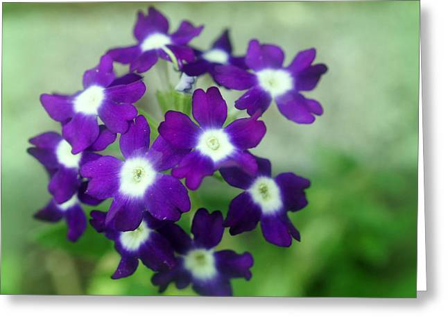 Nature Greeting Cards - The Color Of Nature Greeting Card by Kathy Bucari