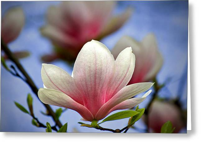 The Color Of Spring Greeting Card by Evelina Kremsdorf