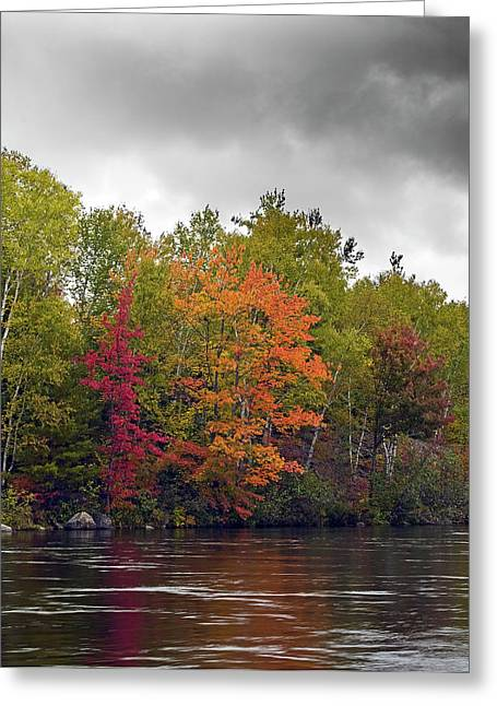 Maine Landscape Greeting Cards - The Colors of Autumn - Maine Greeting Card by Brendan Reals