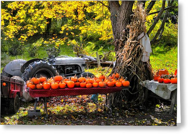 Pumpkins Greeting Cards - The Colors of Harvest Season in New England Greeting Card by Thomas Schoeller