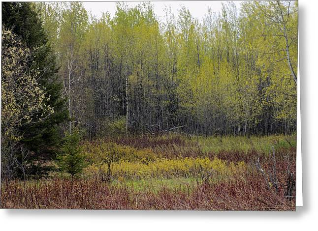 Maine Spring Greeting Cards - The Colors of Spring Greeting Card by William Tasker