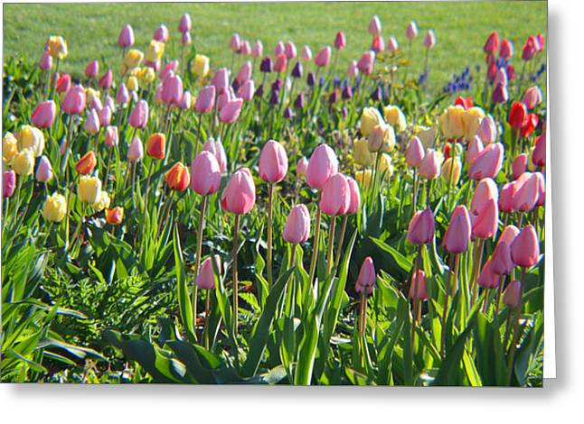 The Colors Of Springtime Greeting Card by Tina M Wenger