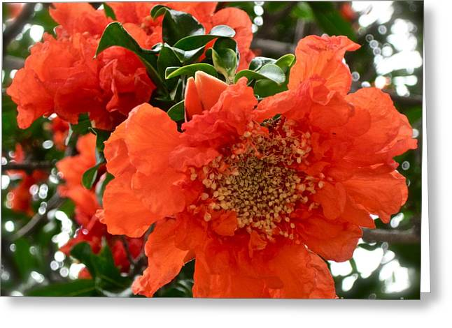 The Colour Orange Greeting Card by Gwyn Newcombe