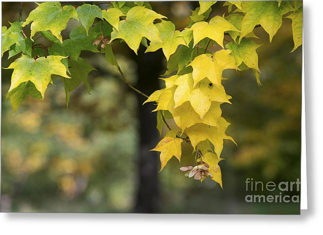 The Coming Of Autumn Greeting Card by Tim Gainey