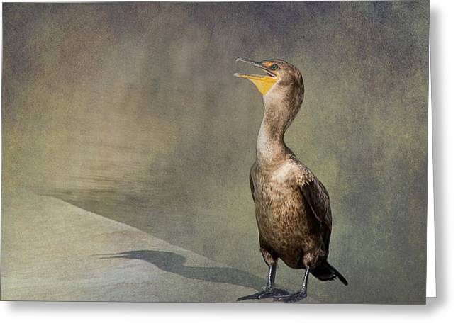 The Comorant By Darrell Hutto Greeting Card by J Darrell Hutto